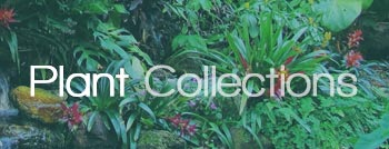 home-plantcollection