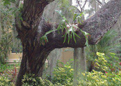 staghorn fern growing on tree