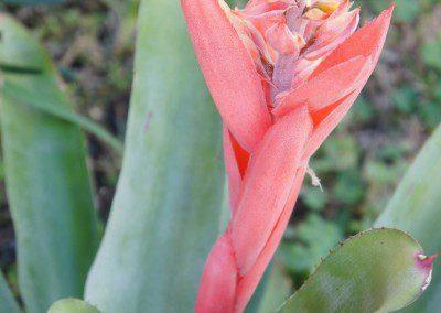 photo of botanical-Little Harv