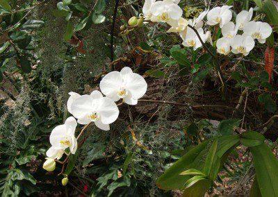 miscellaneous white flowering botanical