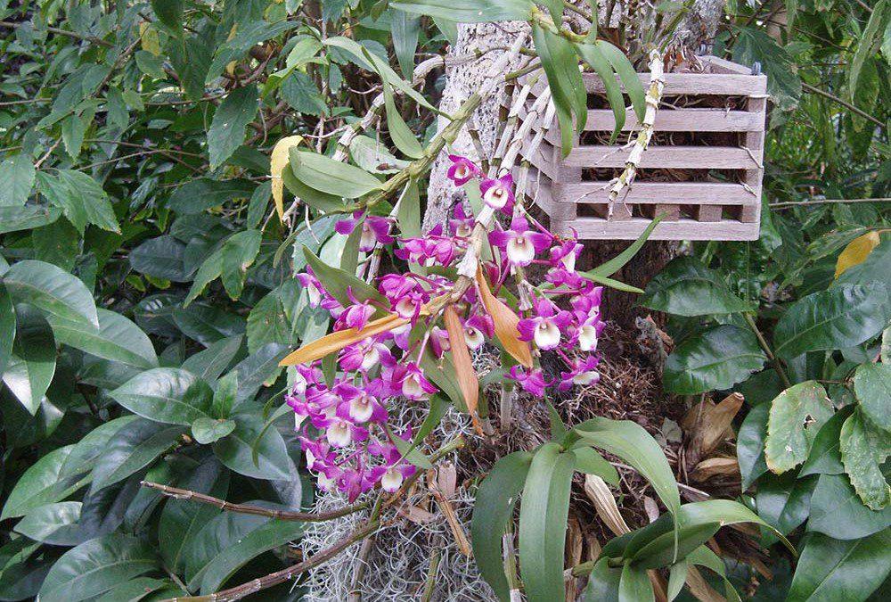 Other Botanicals
