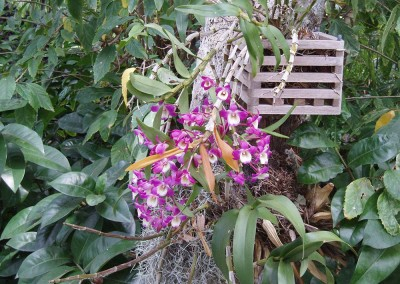 miscellaneous purple and white flowering orchid botanical